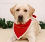 Weihnachts-Halsband mit Tuch 30 cm bis 40 cm rot