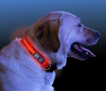 Nite Ize LED Leucht Hundehalsband 33 cm - 46 cm orange